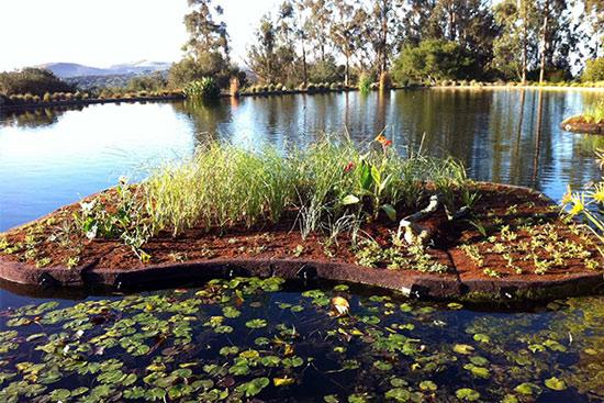 BioHaven® floating island @ Hilliard Bruce Vineyard