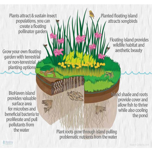 Here's how a BioHaven floating treatment wetland functions.
