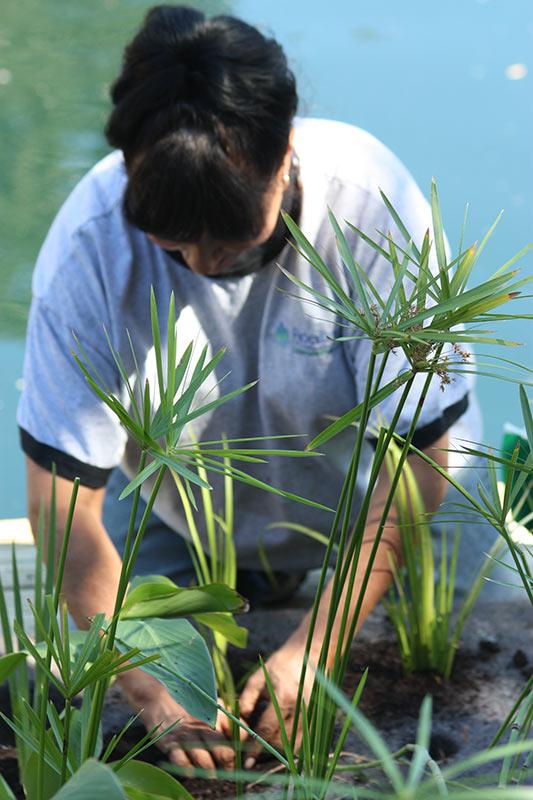 Floating Island Planting