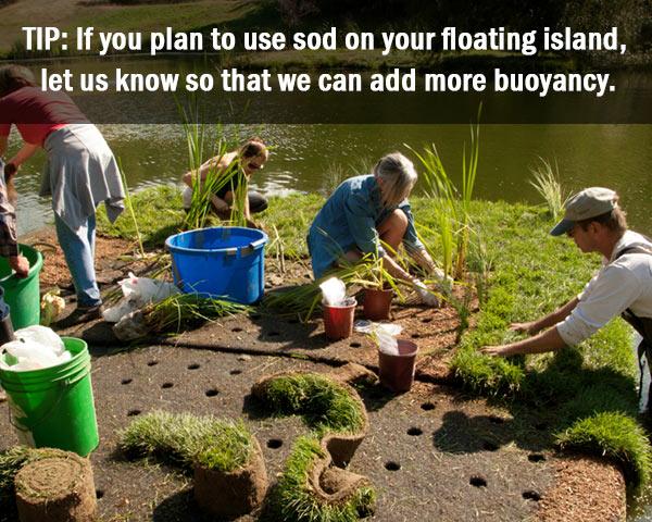 planting-sod