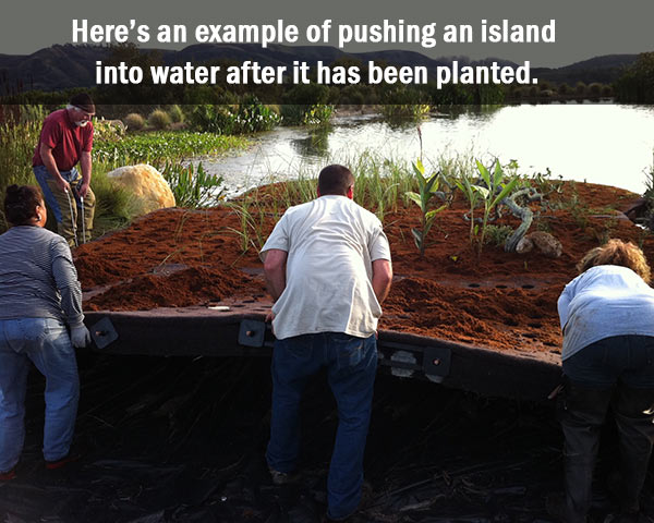 launching a floating island into the pond
