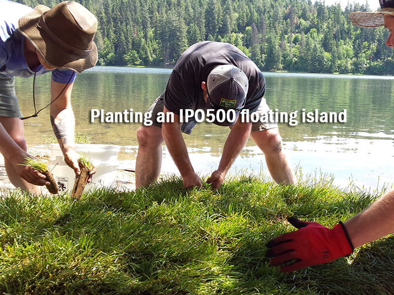 Plant terrestrial or aquatic plants on your BioHaven floating island