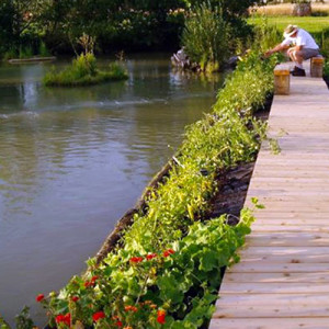 edible plants on floating garden