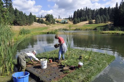 two people planting a floating island with pond plants to control algae in pond water