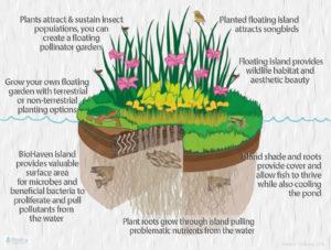 BioHaven floating islands graphic illustrates gardening options, wildlife habitat, songbird habitat, pollinator garden, fish pond and HAB prevention