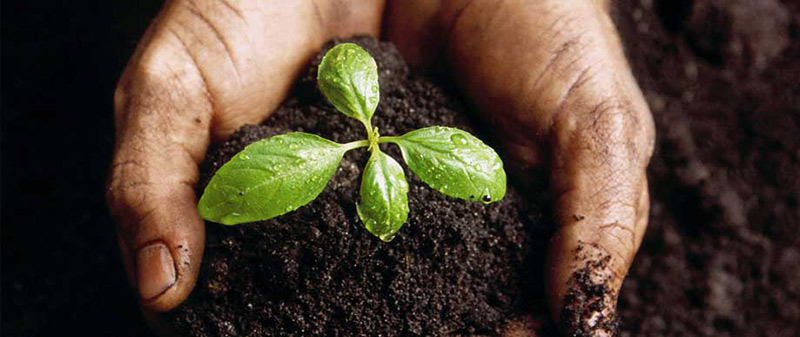 hands hold a green seedling in water soil blend to illustrate the soil health for planting